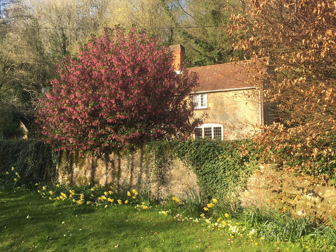 Cottage in spring sunshine, Ightam Mote