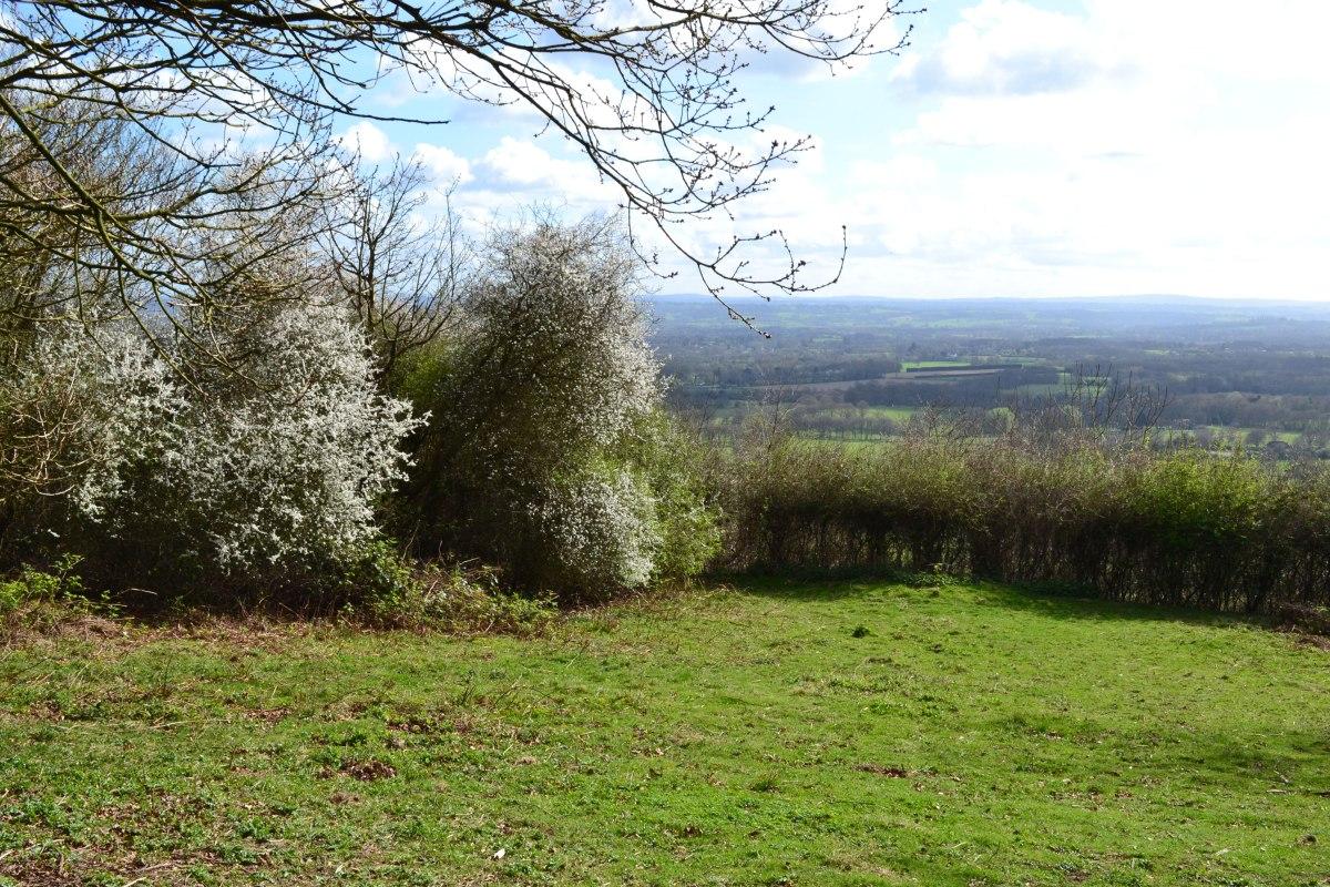 Blackthorn blossom, One Tree Hill, Sevenoaks, Kent