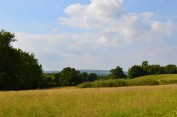 Lovely heat across meadows near Hever