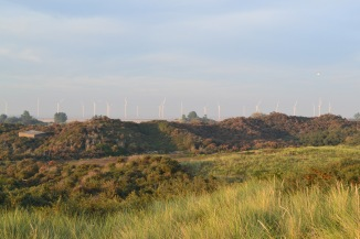 Dunes and wind farm