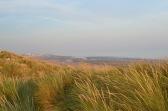 Marram grass, Camber