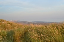 Marram grass, Camber