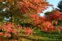 Autumn foliage, Emmett's Garden, Ide Hill
