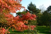 Autumn foliage Emmett's Garden, Ide Hill