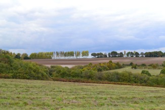 Poplars in the distance, Lullingstone/Eynsford