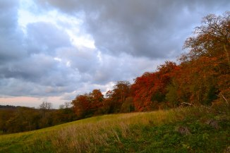 Autumn colours on the Downe walk