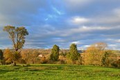 westerham-web-field-trees-view
