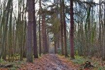 Pine avenue Meenfileld woods