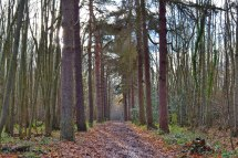 Pine avenue, Meenfield woods