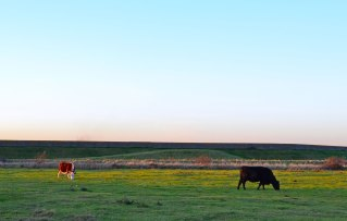 sea-wall-and-cows-2017-12-28-16.38.08