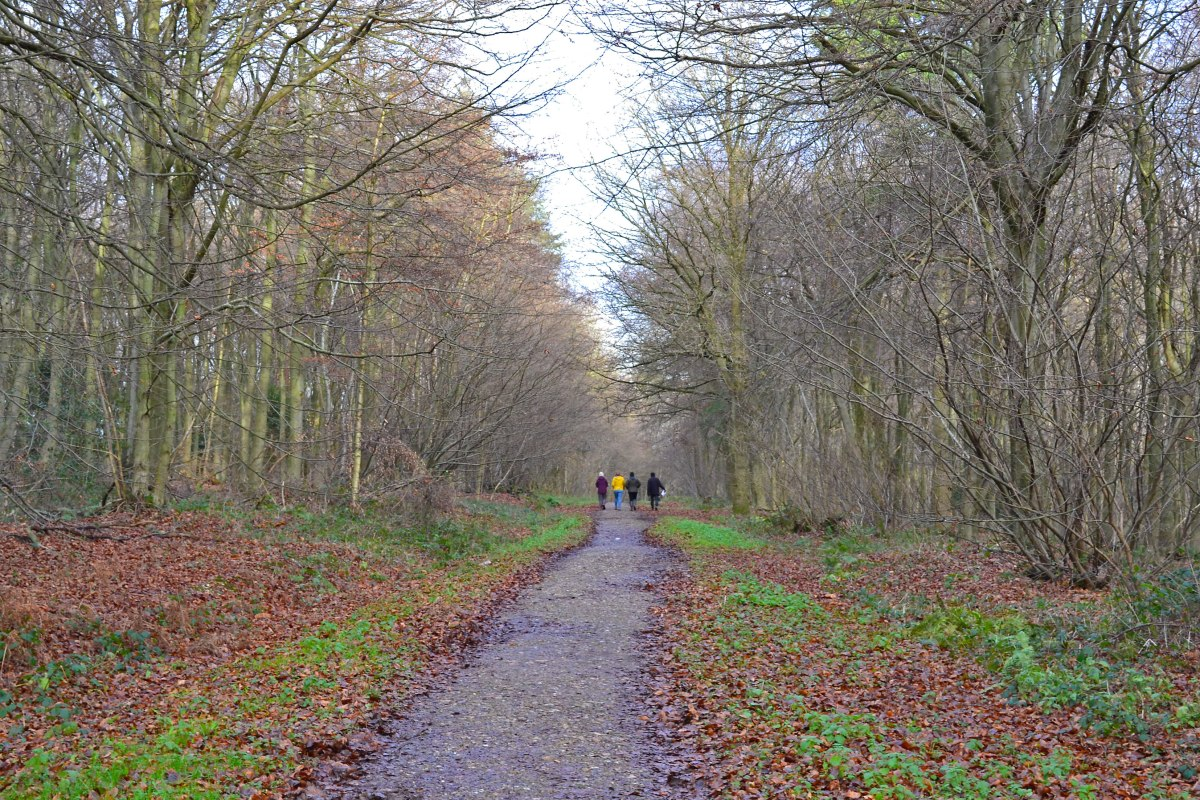 Walkers on the Meenfield woods high level path, Shoreham