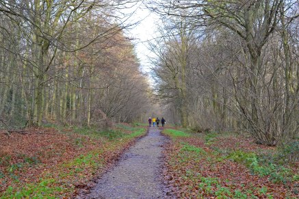 Winter walkers Meenfield woods