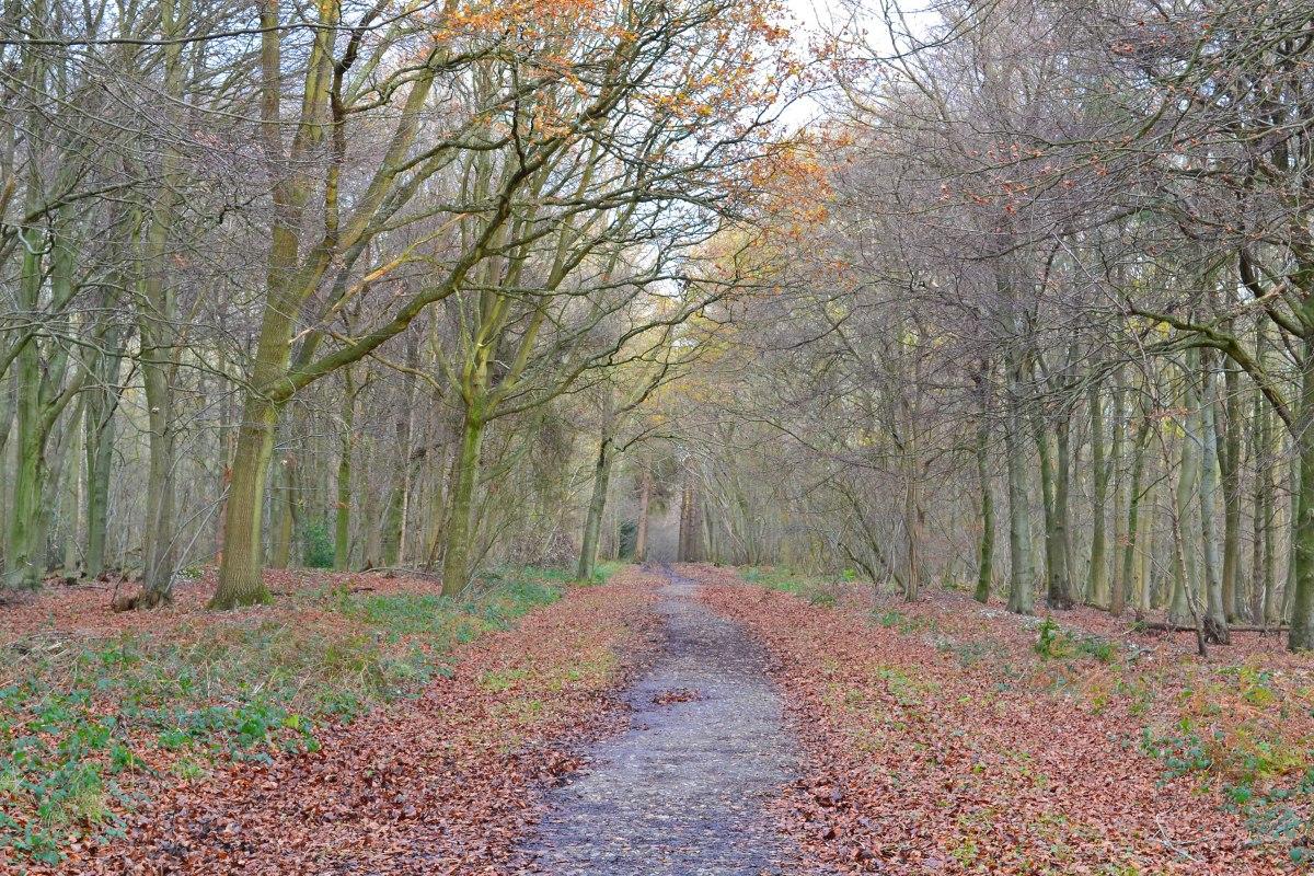 Meenfield woods path, ridge walk west of Shoreham, Kent.