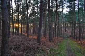 2018-01-07-16.41.03-forest-sunlight2