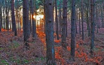 Knole eastern forest