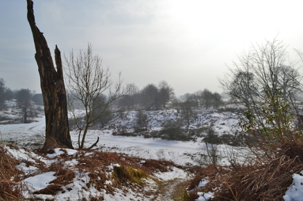web knole east stump snow 2018-03-03 14.52