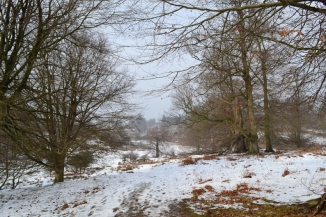 web knole east sunshine 2018-03-03 14.40