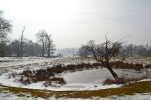 Pond at Knole in snow; March 2018