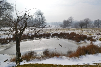 web knole pond snow 2018-03-03 14.36