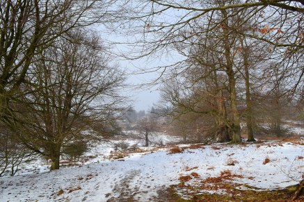 web-knole-snow-view-tree-tangle-2018-03-03-14.40.54