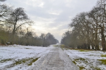 Chestnut Walk. Knole
