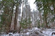 web-snow-in-pines-2018-03-18-17.41.45