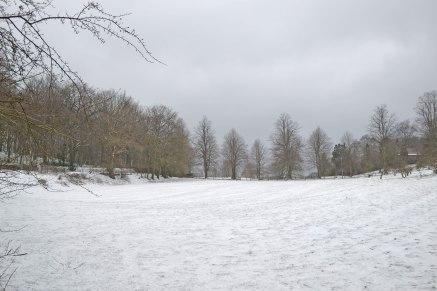 web-snowy-field-2018-03-18-16.52.34