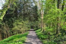 Dunstall woods path (point 2-3)