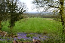 web-scords-wood-sheep-bluebells-view-2018-04-22-16.46.42