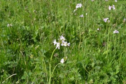 Spring near Ightam Mote