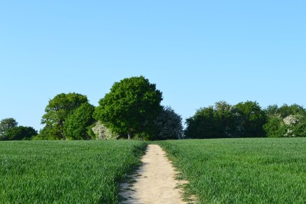 Path at Chiddingstone