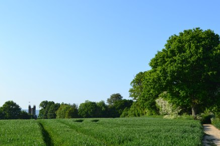 church-path-field-chidd-2018-05-20-18.05