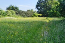Bore Place meadow