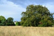 Darwin's fields