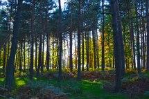 knole-forest-sunlightweb2018-10-21-16.11