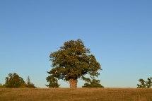 knole-oak-2018-10-21-16.59.17
