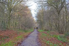 Meenfield woods winter