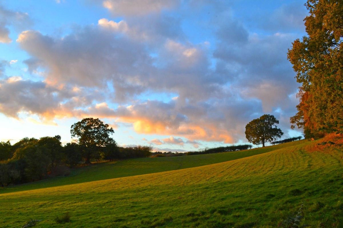 Ide Hill field, dusk, autumn
