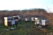 Bee hives. Lullingstone, winter.