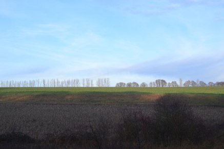 Line of trees. Lullingstone, winter.