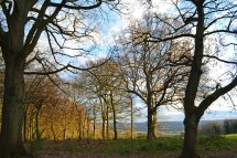 web-2000-trees-filston-road-hill-shoreham-meenfield-DSC_0466