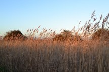 web-1500-reeds-2019-01-17-15.59.24