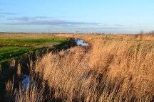 web-1500-reeds-docks-2019-01-17-15.26.53
