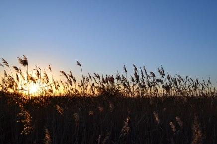 web-1500-reeds-sils-2019-01-17-16.00.55