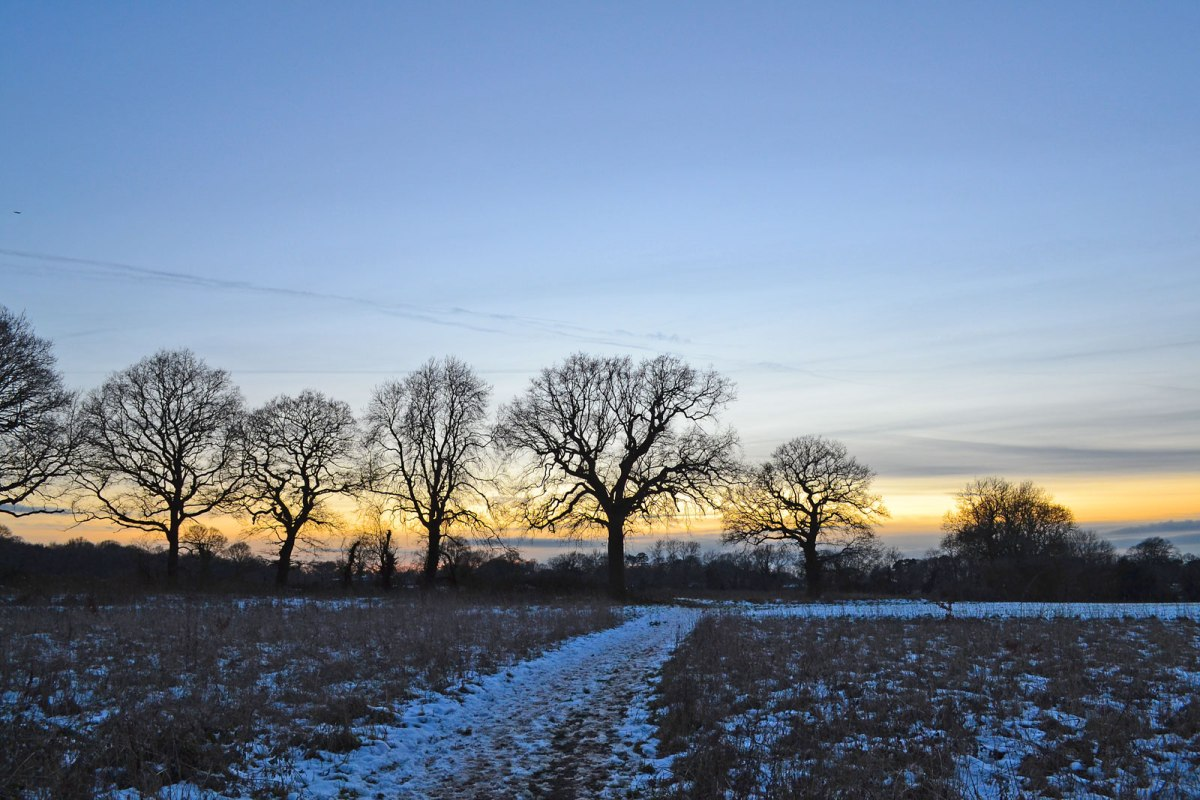 Trees and snow near Dunstall Farm, dusk