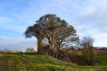 Bomb crater tree