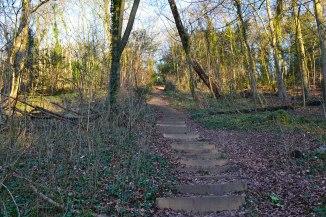 Dunstall Wood steps