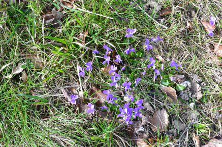 violets 2019-03-10 14.07.32