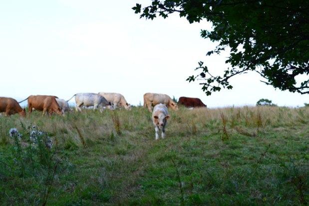 I've heard some bull in mytime…