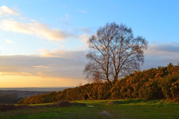 A late winter walk in the Ashdown Forest